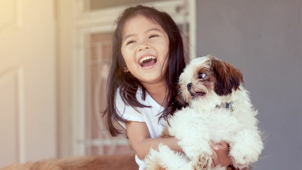 What Makes Shih Tzus Playful