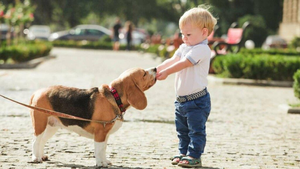 Who Is The Beagle For