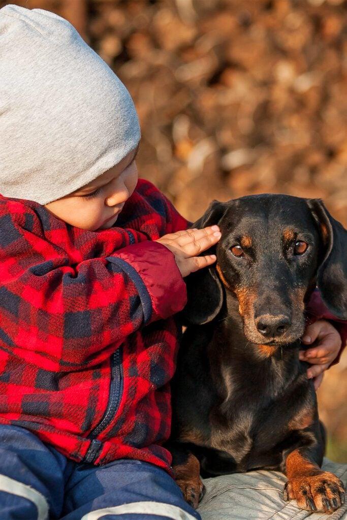 Dachshund Dog With Child