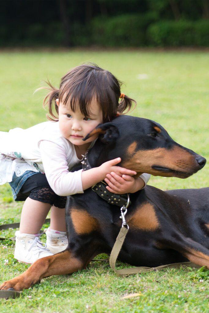 Doberman Pinscher With Child