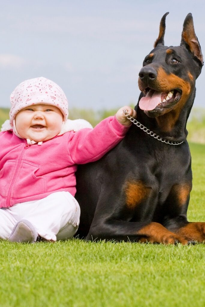 Doberman With Baby