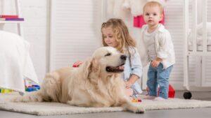 Golden Retrievers And Kids