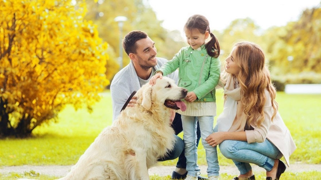 How To Introduce a Golden Retriever to a House with Young Children