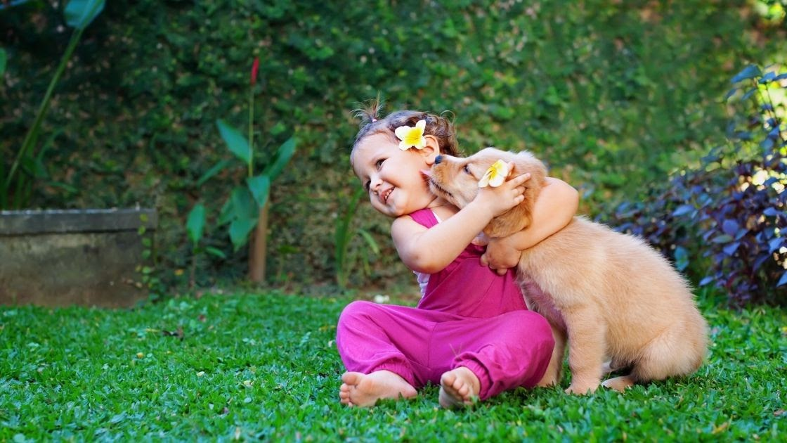 How are Golden Retrievers with Toddlers & Babies