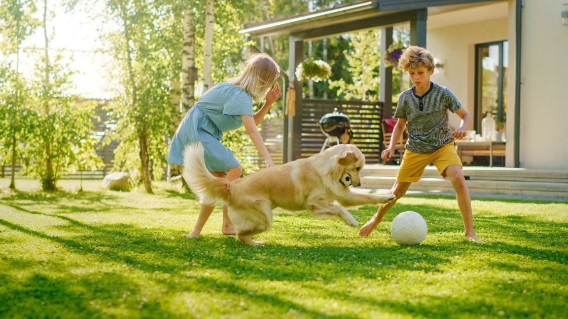 How to Train Your Golden Retriever to be Friendly with Kids