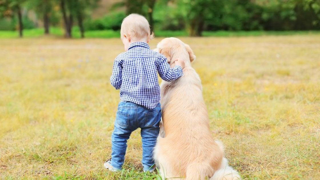 What Makes Your Golden Retrievers Good with Kids