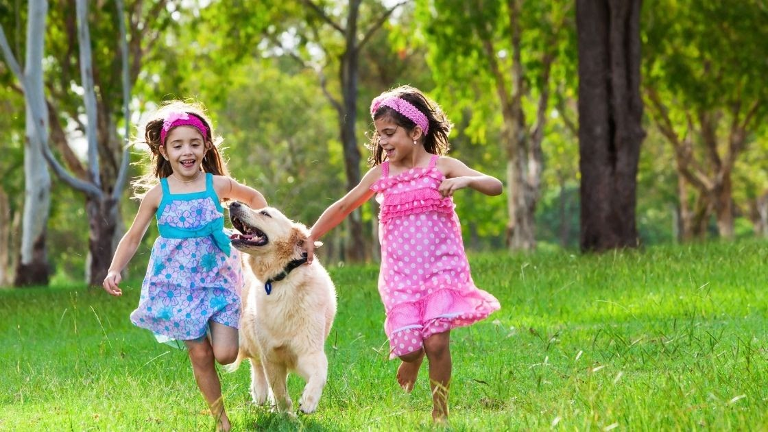 Why Is a Golden Retriever a Great Choice for Families