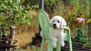 Funny Lab Relaxing