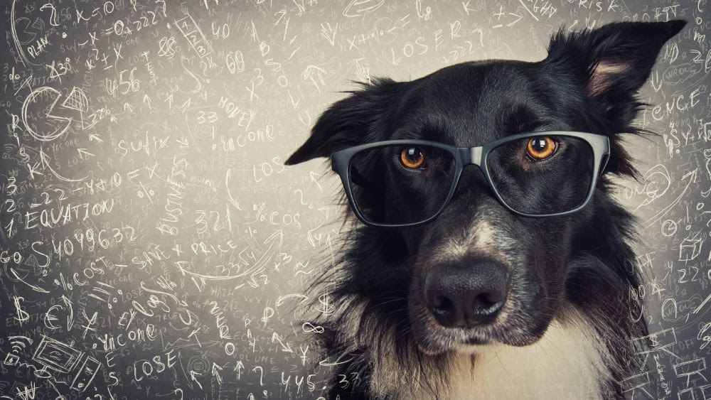 How Accurate are Dog DNA tests?